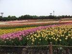 Kodomonohi_022_3