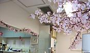 Sakura_001_2